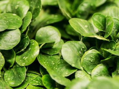 Con l'insalata Vivi Verde Coop si fa accoglienza